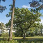 Décor mural extérieur – Pin et Chêne – Collection Forêt