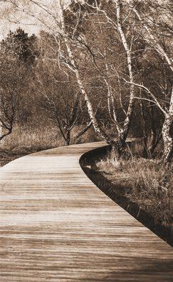 Toile de transat à l'unité – Collection Forêt