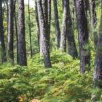 Décor mural extérieur – Forêt – Collection Forêt
